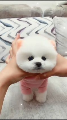 Cute Baby Puppies, Cute Animals Puppies, Super Cute Puppies, Baby Animals Super Cute, Cute Stuffed Animals, Cute Little Animals, Cute Funny Animals, Cute Fluffy Dogs, Very Cute Dogs