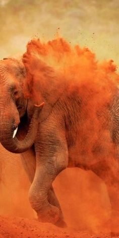 I ❤ COLOR NARANJA ❤ Elephants (let's leave them alone- they don't want to be around us)