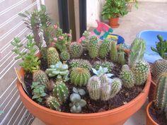 Plusieurs Cactus dans un même pot ???