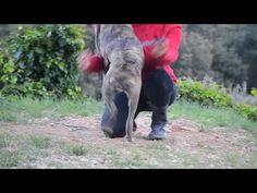 Bengala ist ein liebes Hundekind - http://www.tier-kleinanzeigen.com/ads/bengala-ist-ein-liebes-hundekind/