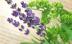 How to add medicinal plants to your garden