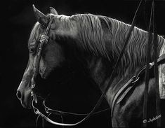 """scratchboard Art by Cathy Sheeter- """"A Distant Gaze"""" Scratchboard Art, Scratch Art, Horse Drawings, Black White Art, Horse Photos, Equine Art, Western Art, Horse Art, Beautiful Paintings"""