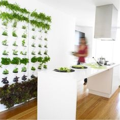 Indoor wall planter for a kitchen herb garden. Just snip and add to your recipes...can't get any fresher than that! Plus, the garden is so pretty it becomes wall art.
