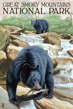 Black Bears Fishing - Smoky Mountains National Park, TN - Lantern Press Poster