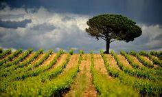 Vignoble du Languedoc-Roussillon | Sud de France Oenotourisme