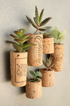 Wine bottle corks hollowed out and stuffed with little low water plants!
