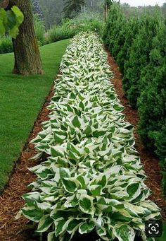 Landscaping Ideas For Side Of House Perennials - Landscaping Design Drawings Pool - Garden Landscaping Layout - Desert Landscaping Front Yard House - - Front House Landscaping, Landscaping Plants, Landscaping Ideas, Succulent Landscaping, Patio Ideas, Yard Ideas, Front Yard Design, House Landscape, Desert Landscape