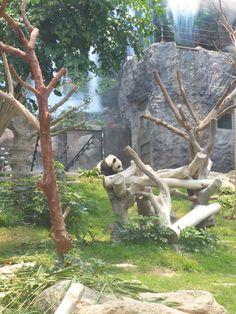 Pavilhão do Panda Gigante de Macau © Viaje Comigo Macau China, Panda, Traveling, Pandas