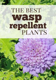 Mar 2020 - Do you know the best wasp repellent plants are to include in landscaping that look nice and also keep those nasty wasps away? Here are some tips for natural pest control using plants and herbs.