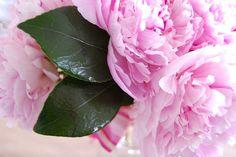 peony close-up   Flickr - Photo Sharing!