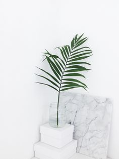 pretty palm + marble #home #interiordesign #houseplant