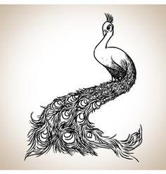 Peacock sketch vector
