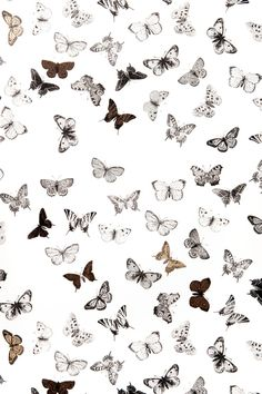 Mimou Tapet Butterfly