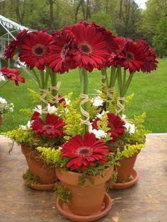 Картинки по запросу topiarios de flores naturales