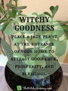 Crafting Magick Tip, Witch Tip - Use a Jade plant in your magickal practice to attract good luck, prosperity, and blessings. Green Witchcraft, Magick Spells, Witchcraft For Beginners, Kitchen Witchery, Herbal Magic, Magic Herbs, Fete Halloween, Halloween Ball, Baby Witch