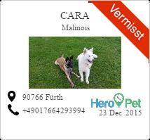 Cara /Malinois/vermisst