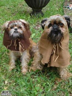 Ewok dog costumes!  Adorable!