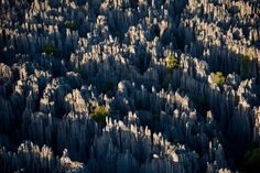Stone Forest, Madagascar - lemurs must hop across these quickly to escape predators from above