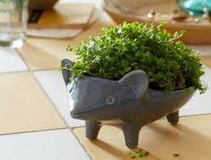 planter gadget에 대한 이미지 검색결과
