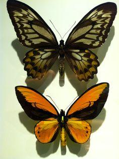Butterflies at the Montreal Insectarium. Zippertravel.com Digital Edition