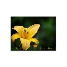 Taglilien pflegen nach der Blüte. So fördern Sie Nachblüte und einen schönen Herbsteffekt