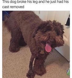 52 Best Ideas for funny cute memes hilarious dogs Animal Jokes, Funny Animal Memes, Dog Memes, Funny Animal Pictures, Cute Funny Animals, Cute Baby Animals, Funny Cute, Dog Pictures, Funny Dogs