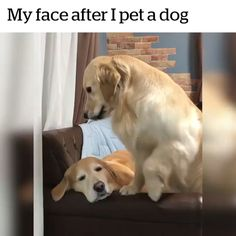 Me after touching a dog 🤚😇 - Dog Memes - Adorable Animals Funny Animal Memes, Dog Memes, Funny Animal Videos, Cute Funny Animals, Cute Baby Animals, Funny Cute, Funny Dogs, Animals And Pets, Funny Humor