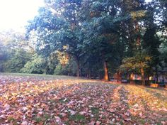 Le ombre si distendono. Autunno al parco Lambro.
