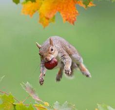 Lo scoiattolo e la castagna...    (Al Sibircev - G+)