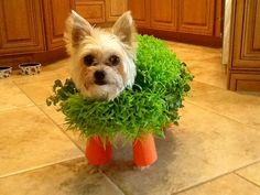 This Chia dog. | 29 Dogs You Won't Believe Actually Exist