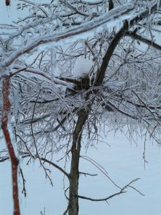 Bird Nest with Snow, February 2014, Photo by Trish Breedlove