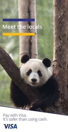 Visa helps make sure your payments in 🇨🇳China🇨🇳are safe and secure 🔒 Funny Animals, Funny Animal Quotes, Cute Animals, Cute Puppies, Dachshund Puppies, Pet Dogs, Pets, Cute Kitten Pics, Kittens Cutest