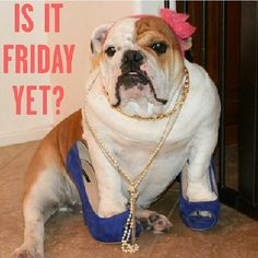 IS IT FRIDAY YET ?
