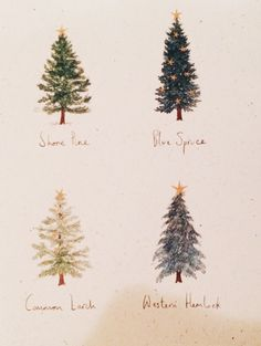 Christmas Tree species