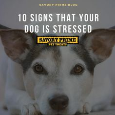10 Signs That Your Dog Is Stressed | Savory Prime Pet Treats