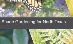 Shade Gardening for North Texas