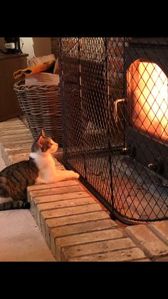 One of Garden Requisites' happy customers enjoying our steel galvanized traditional diamond pattern fireguard. We can make bespoke fireguards to suit your specific requirements, contact us on 01225 Open Fires, Diamond Pattern, Stove, Cats And Kittens, Bespoke, Suit, Traditional, Metal, Happy