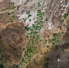الزراعة وسط الصحراء - السعودية  Agriculture in the desert - Saudi Arabia
