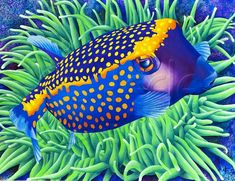 Boxfish Berthold Carolyn Steele - Close Up Of A Bashful Looking Fantastically Colored Spotted Boxfish Hovering Over A Large Green Sea Anemone Available In Various Sizes Of Matted And Unmatted Prints Canvas Giclees And Notecards P Beautiful Sea Creatures, Tropical Art, Beautiful Fish, Colorful Fish, Fish Art, Fauna, Aquarium Fish, Freshwater Aquarium, Betta Fish