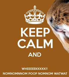 Keep Calm Guinea Pig Meme