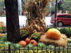 Otra vista de una de las jardineras en Ave. Michigan en época de #Halloween en #Chicago
