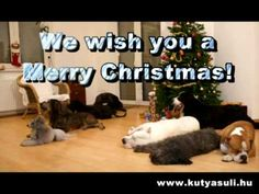 Our dogschool's presentation group made a surprise video for Christmas. Free online A doggy Christmas surprise ecards on Christmas Christmas Music, Christmas Dog, Christmas Presents, Christmas Tree Decorations, Christmas Ecard, Merry Christmas, Christmas Shopping, What Dogs, All Dogs