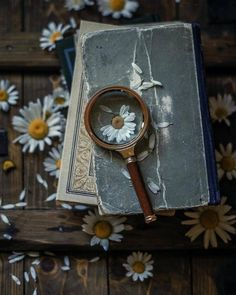 Book photography wallpaper life 47 Ideas for 2019 Flower Aesthetic, Book Aesthetic, Aesthetic Vintage, Aesthetic Photo, Aesthetic Pictures, Book Photography, Creative Photography, Photos Amoureux, Daisy Love