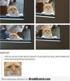 Funny cat facial expressions