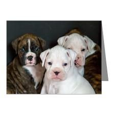 Are these Boxers cute or what. Who wants a puppy?