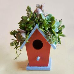 Celebrate Spring! A little birdhouse decorated with succulents makes a great gift or table or party favor.