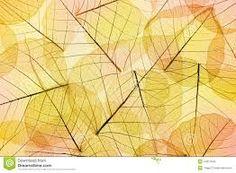 Resultado de imagem para folhas de outono transparente