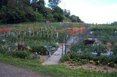 Community vegetable garden on Boyce Road in Upper St Clair