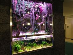 Aquarium @ Foksal Residence