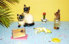 24_colleen-durkin-photography-still-life-color-banana-morning-still-life-cats-gators
